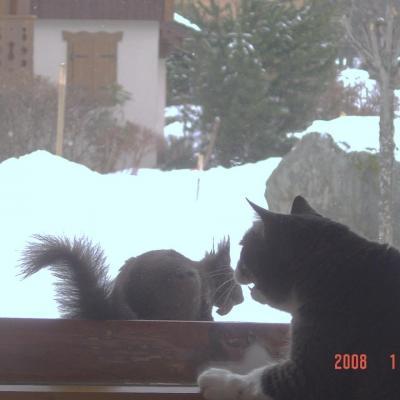 Minette et l'écureuil